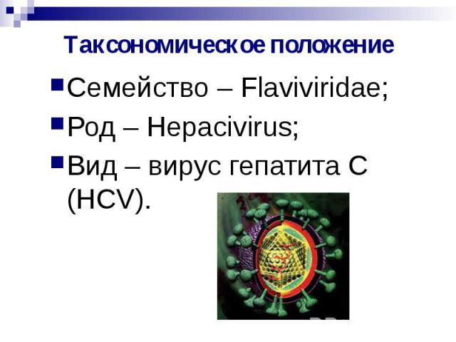 Таксономическое положение Семейство – Flaviviridae; Род – Hepacivirus; Вид – вирус гепатита С (HCV).
