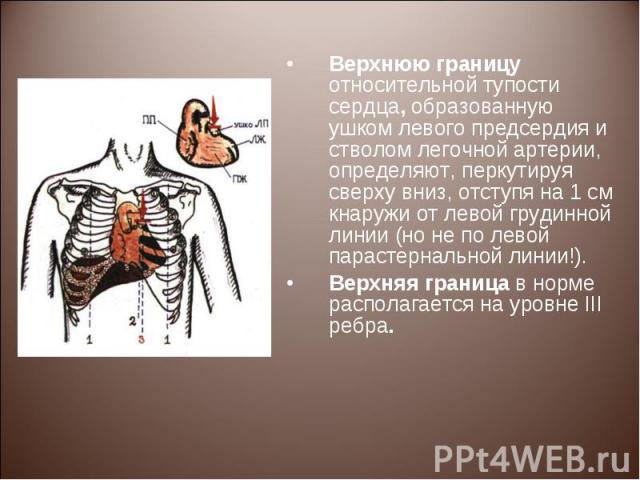 Верхнюю границу относительной тупости сердца, образованную ушком левого предсердия и стволом легочной артерии, определяют, перкутируя сверху вниз, отступя на 1 см кнаружи от левой грудинной линии (но не по левой парастернальной линии!). Верхнюю гран…