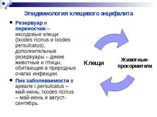 Эпидемиология клещевого энцефалита Резервуар и переносчик – иксодовые клещи (Ixo