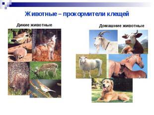 Животные – прокормители клещей