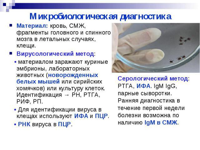 Микробиологическая диагностика Материал: кровь, СМЖ, фрагменты головного и спинного мозга в летальных случаях, клещи. Вирусологический метод: • материалом заражают куриные эмбрионы, лабораторных животных (новорожденных белых мышей или сирийских хомя…