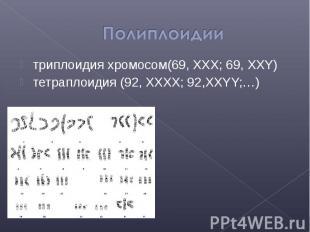 триплоидия хромосом(69, XXX; 69, XXY) триплоидия хромосом(69, XXX; 69, XXY) тетр
