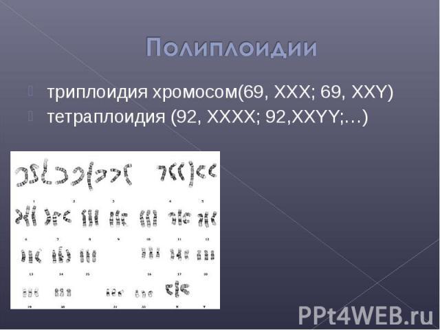 триплоидия хромосом(69, XXX; 69, XXY) триплоидия хромосом(69, XXX; 69, XXY) тетраплоидия (92, XXXX; 92,XXYY;…)