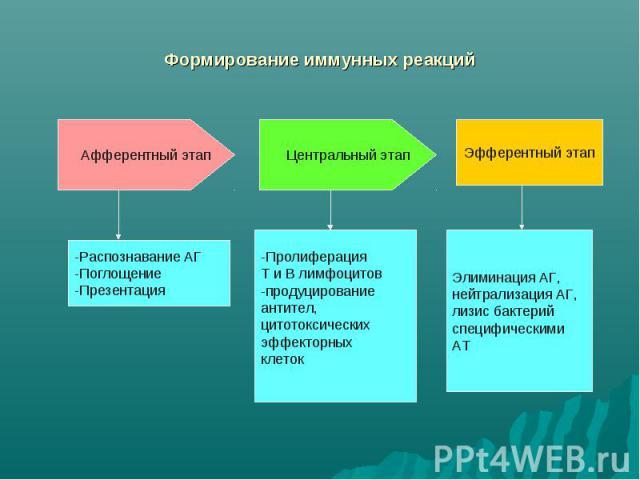 Формирование иммунных реакций