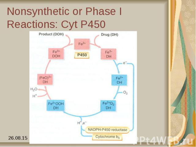 Nonsynthetic or Phase I Reactions: Cyt P450
