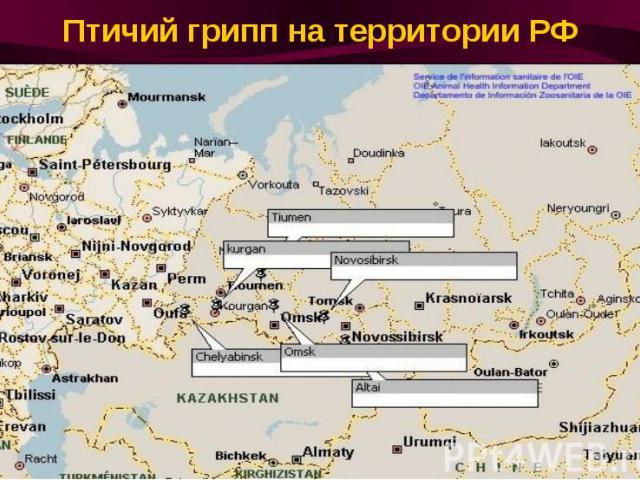 Птичий грипп на территории РФ