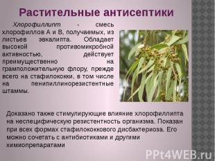 Растительные антисептики Хлорофиллипт - смесь хлорофиллов А и В, получаемых, из