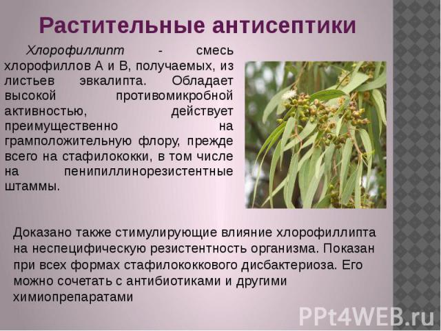 Растительные антисептики Хлорофиллипт - смесь хлорофиллов А и В, получаемых, из листьев эвкалипта. Обладает высокой противомикробной активностью, действует преимущественно на грамположительную флору, прежде всего на стафилококки, в том числе на пени…