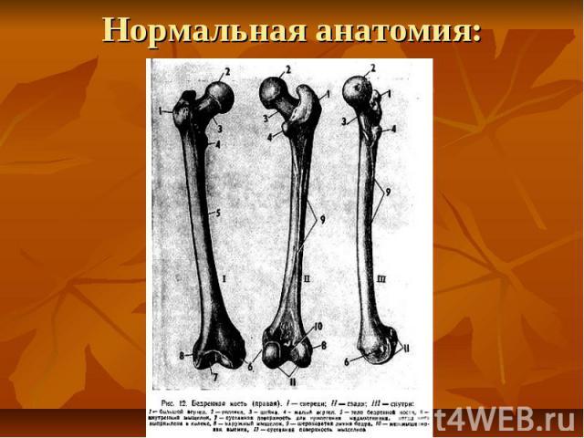 Нормальная анатомия: