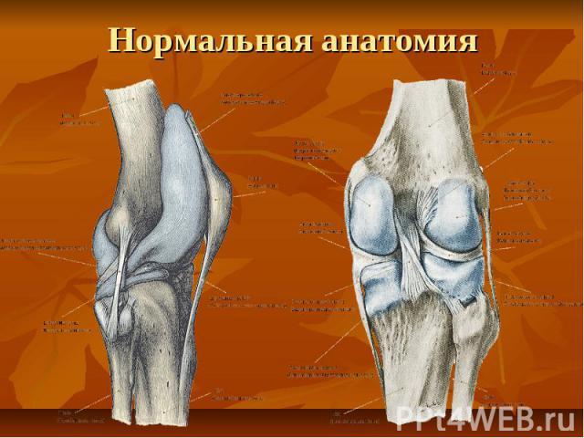 Нормальная анатомия