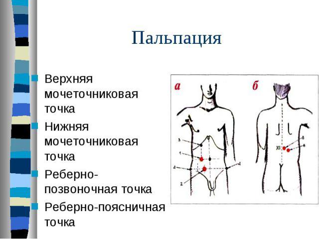 Верхняя мочеточниковая точка Верхняя мочеточниковая точка Нижняя мочеточниковая точка Реберно-позвоночная точка Реберно-поясничная точка