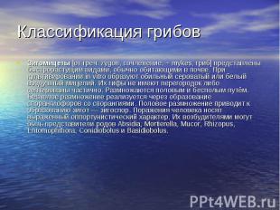 Классификация грибов Зигомицеты [от греч. zygon, сочленение, + mykes, гриб] пред