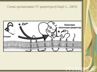 Схема организации ОТ рецептора (Gimpl G., 2001)