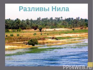 Благодаря высоким урожаям земля Египта могла прокормить многочисленный народ, в