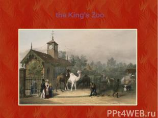 the King's Zoo