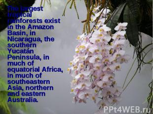 The largest tropical rainforests exist in the Amazon Basin, in Nicaragua, the so