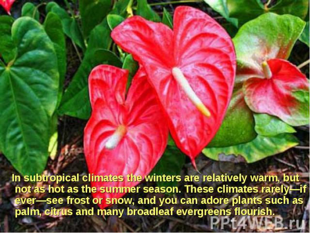In subtropical climates the winters are relatively warm, but not as hot as the summer season. These climates rarely—if ever—see frost or snow, and you can adore plants such as palm, citrus and many broadleaf evergreens flourish. In subtropical clima…