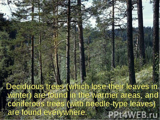 Deciduous trees (which lose their leaves in winter) are found in the warmer areas, and coniferous trees (with needle-type leaves) are found everywhere. Deciduous trees (which lose their leaves in winter) are found in the warmer areas, and coniferous…