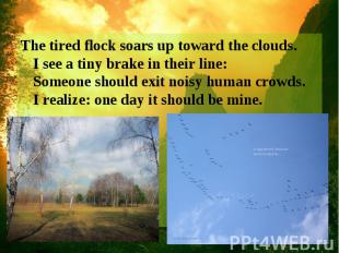 The tired flock soars up toward the clouds. I see a tiny brake in their line: So