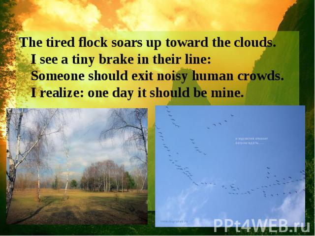 The tired flock soars up toward the clouds. I see a tiny brake in their line: Someone should exit noisy human crowds. I realize: one day it should be mine.