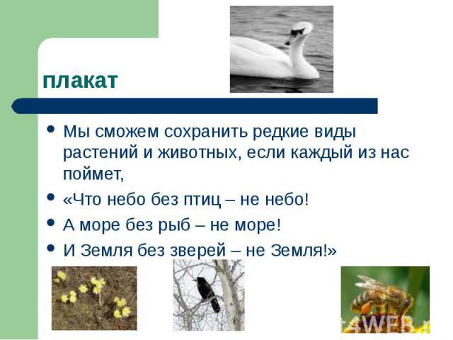 плакат Мы сможем сохранить редкие виды растений и животных, если каждый из нас поймет, «Что небо без птиц – не небо! А море без рыб – не море! И Земля без зверей – не Земля!»