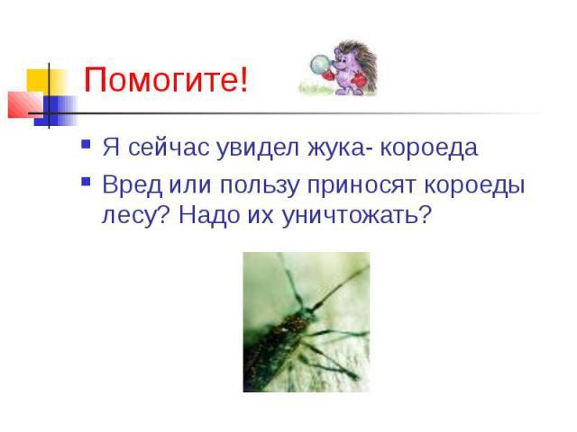 Я сейчас увидел жука- короеда Я сейчас увидел жука- короеда Вред или пользу приносят короеды лесу? Надо их уничтожать?