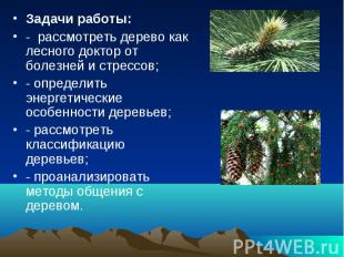 Задачи работы: - рассмотреть дерево как лесного доктор от болезней и стрессов; -