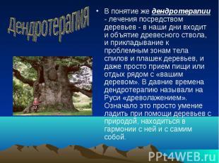В понятие же дендротерапии - лечения посредством деревьев - в наши дни входит и