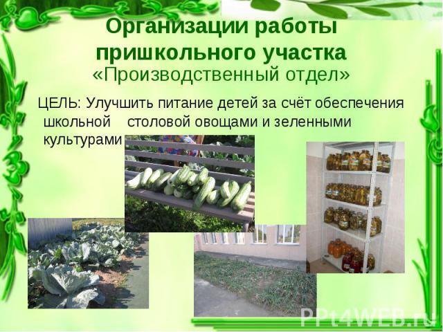 «Производственный отдел» «Производственный отдел» ЦЕЛЬ: Улучшить питание детей за счёт обеспечения школьной столовой овощами и зеленными культурами
