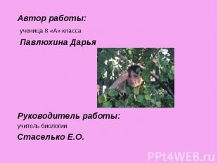 Автор работы: Автор работы: ученица 8 «А» класса Павлюхина Дарья Руководитель ра