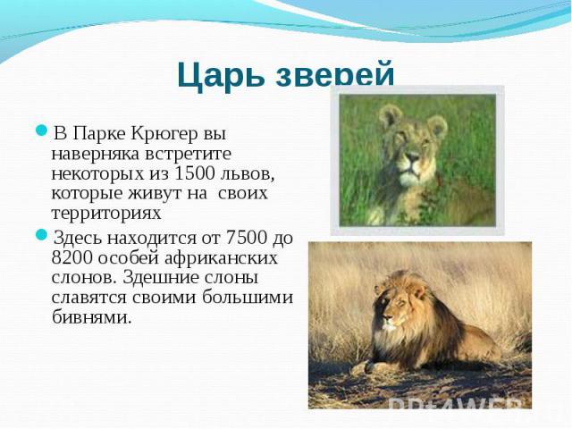 В Парке Крюгер вы наверняка встретите некоторых из 1500 львов, которые живут на своих территориях В Парке Крюгер вы наверняка встретите некоторых из 1500 львов, которые живут на своих территориях Здесь находится от 7500 до 8200 особей африканских сл…