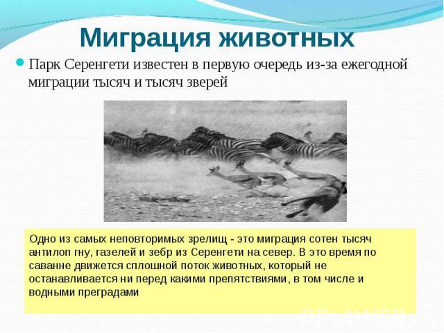 Парк Серенгети известен в первую очередь из-за ежегодной миграции тысяч и тысяч зверей Парк Серенгети известен в первую очередь из-за ежегодной миграции тысяч и тысяч зверей