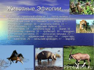 Животные Эфиопской области: 1 —лев и львица; 2 — лисица фенек; 3 —леопард; 4 —дв