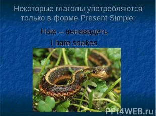 Некоторые глаголы употребляются только в форме Present Simple: Hate – ненавидеть