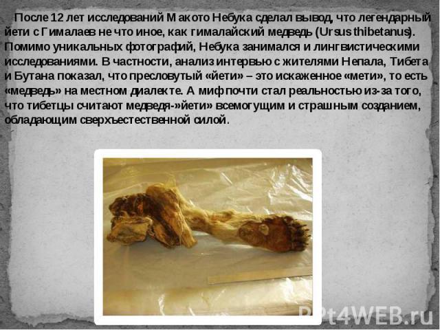 После 12 лет исследований Макото Небука сделал вывод, что легендарный йети с Гималаев не что иное, как гималайский медведь (Ursus thibetanus). Помимо уникальных фотографий, Небука занимался и лингвистическими исследованиями. В частности, анализ инте…