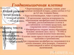 Гладкомышечная клетка Веретеновидные, длинные, тонкие, реже звездчатые (мочевой