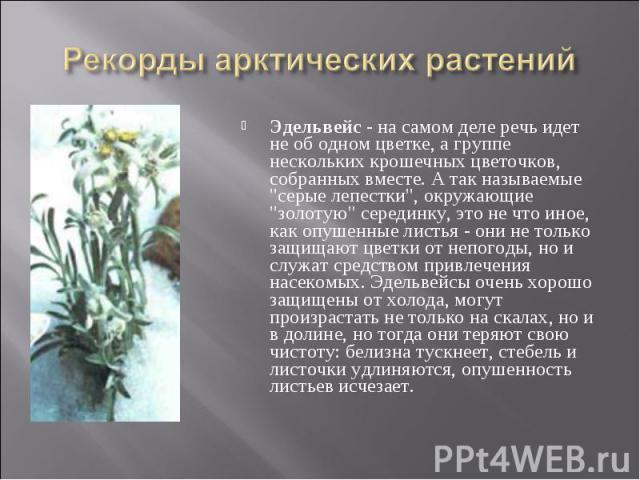 """Эдельвейс - на самом деле речь идет не об одном цветке, а группе нескольких крошечных цветочков, собранных вместе. А так называемые """"серые лепестки"""", окружающие """"золотую"""" серединку, это не что иное, как опушенные листья - они не …"""