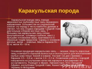 Каракульская порода Каракульская порода овец, порода жирнохвостых грубошёрстных