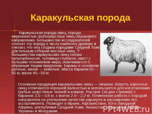 Каракульская порода Каракульская порода овец, порода жирнохвостых грубошёрстных овец смушкового направления. Большинство исследователей относит эту породу к числу наиболее древних и считает, что она создана народами Средней Азии длительным отбором м…