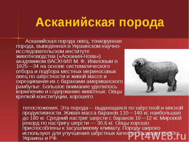 Асканийская порода Асканийская порода овец, тонкорунная порода, выведенная в Украинском научно-исследовательском институте животноводства («Аскания-Нова») академиком ВАСХНИЛ М. Ф. Ивановым в 1925—34 на основе систематического отбора и подбора местны…
