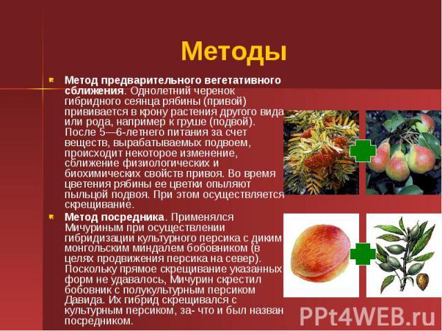 Методы Метод предварительного вегетативного сближения. Однолетний черенок гибридного сеянца рябины (привой) прививается в крону растения другого вида или рода, например к груше (подвой). После 5—6-летнего питания за счет веществ, вырабатываемых подв…