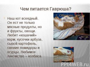 Чем питается Гаврюша? Наш кот всеядный. Он ест не только мясные продукты, но и ф