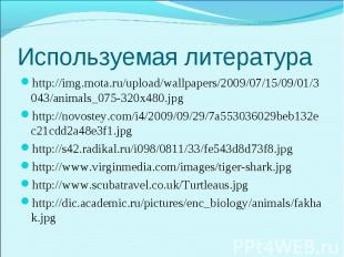 http://img.mota.ru/upload/wallpapers/2009/07/15/09/01/3043/animals_075-320x480.j