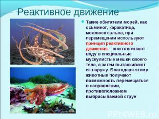 Такие обитатели морей, как осьминог, каракатица, моллюск сальпа, при перемещении