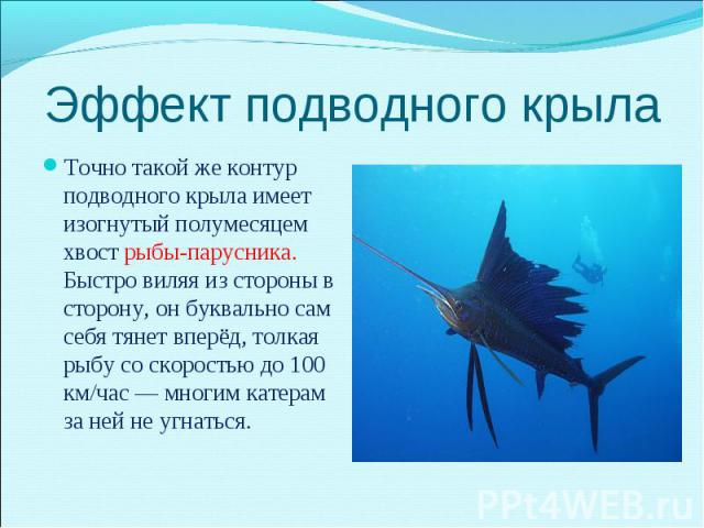 Точно такой же контур подводного крыла имеет изогнутый полумесяцем хвост рыбы-парусника. Быстро виляя из стороны в сторону, он буквально сам себя тянет вперёд, толкая рыбу со скоростью до 100 км/час — многим катерам за ней не угнаться. Точно такой ж…