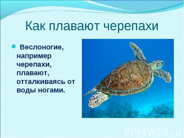 Веслоногие, например черепахи, плавают, отталкиваясь от воды ногами. Веслоногие, например черепахи, плавают, отталкиваясь от воды ногами.