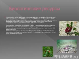 Биологические ресурсы Растительный мир: на территории России насчитывается 11 40