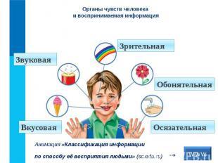 Органы чувств человека и воспринимаемая информация