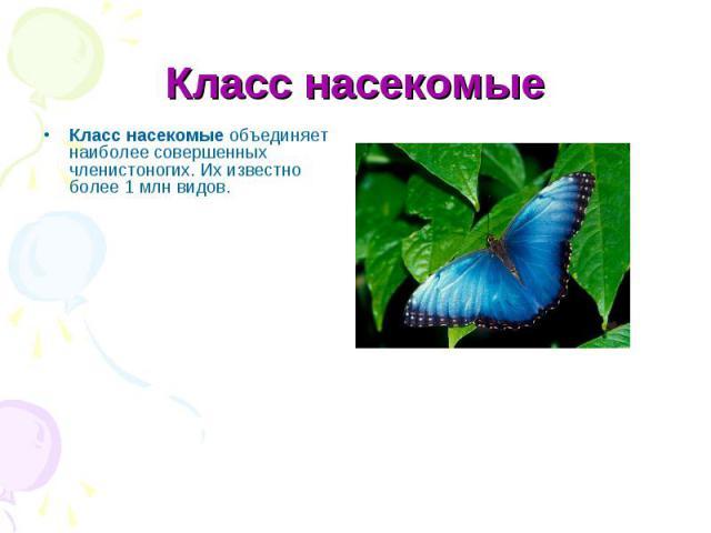 Класс насекомыеобъединяет наиболее совершенных членистоногих. Их известно более 1 млн видов.