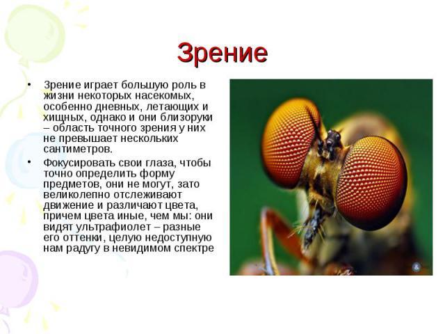 Зрение играет большую роль в жизни некоторых насекомых, особенно дневных, летающих и хищных, однако и они близоруки – область точного зрения у них не превышает нескольких сантиметров.Фокусировать свои глаза, чтобы точно определить форму предметов, о…